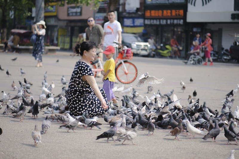 Chiangmai泰国- 2018年3月16日:中国游人获得与鸽子的乐趣在清迈门 免版税图库摄影