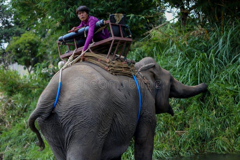 Chiangmai, Tailandia - 31 marzo 2016: Resti del Mahout sull'elefante fotografie stock