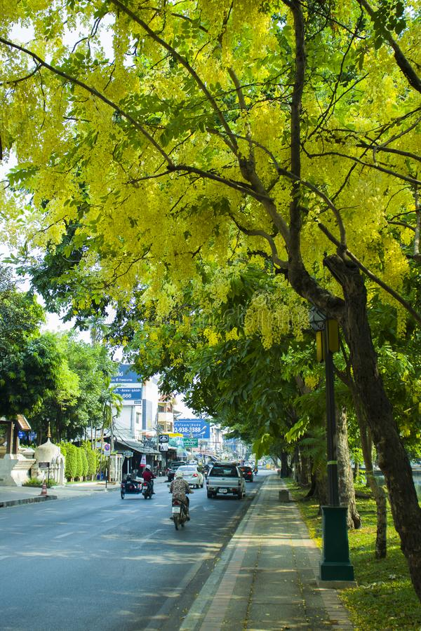 CHIANGMAI, THAILAND-APRIL 30,2019: Bank unter dem Baum in den botanischen G?rten in Chiangmai Thailand stockbilder