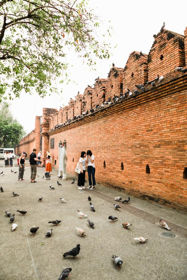 CHIANGMAI,THAILAND APRIL 9,2019 - Travellers with a flock of pigeons at Thapae gate ancient brick wall of Chiangmai royalty free stock images