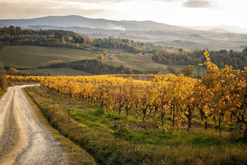 Chianti葡萄园的秋天颜色在锡耶纳和佛罗伦萨之间的 意大利 免版税图库摄影