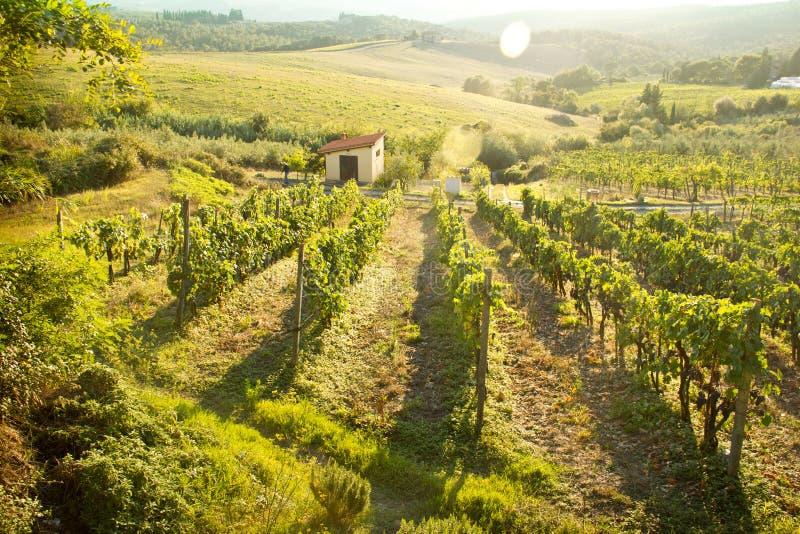 Chianti葡萄园风景在托斯卡纳,意大利 图库摄影