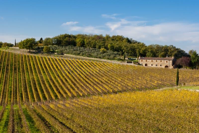 Chianti酒区域葡萄园,托斯卡纳 免版税库存图片