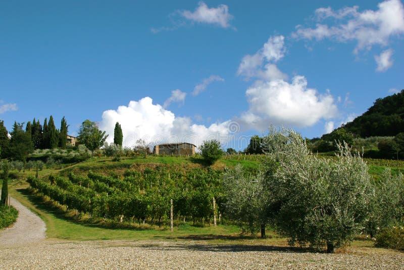 Chianti do vinhedo, Toscânia, Italy fotografia de stock