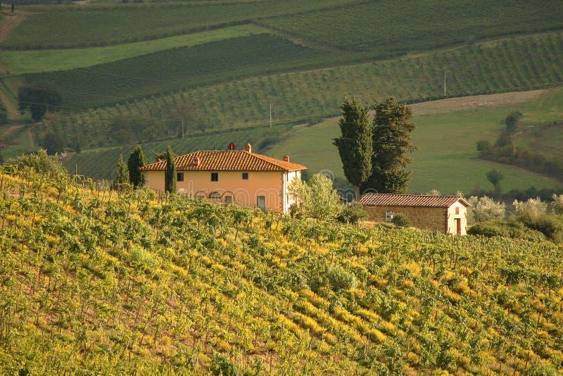 chianti Italy Tuscany fotografia royalty free