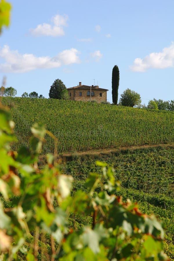 chianti Italy Tuscany winnica fotografia royalty free