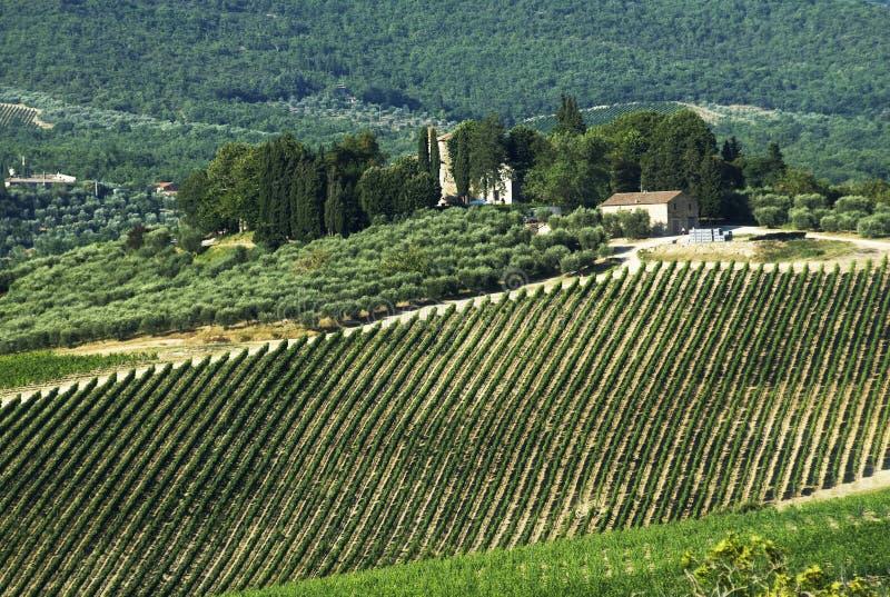 Chianti Landschaft stockfotografie
