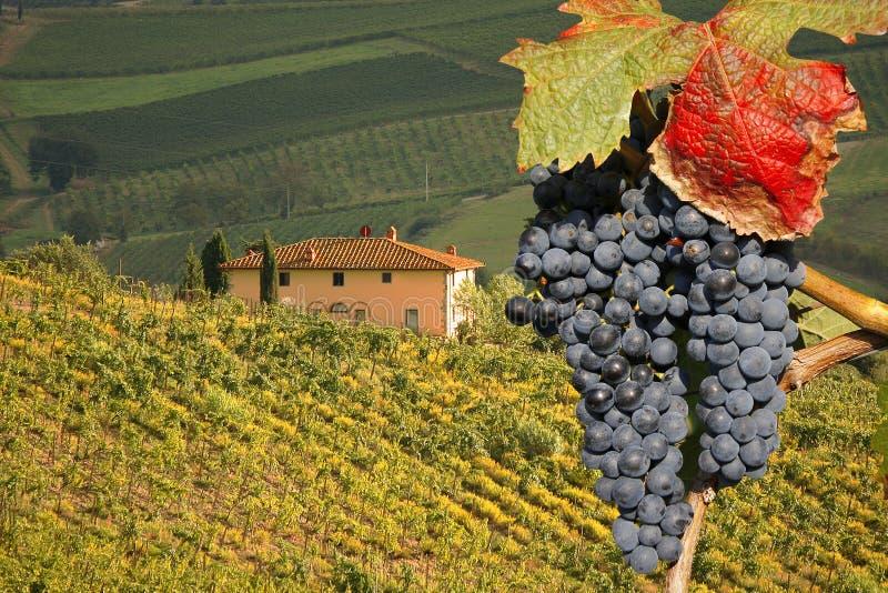 Chianti, Toscana, Italia fotografía de archivo libre de regalías
