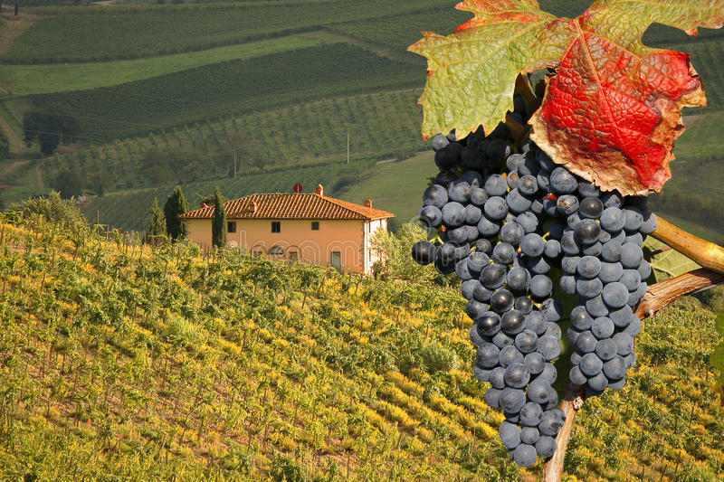 Chianti, Tuscany, Italy royalty free stock photography
