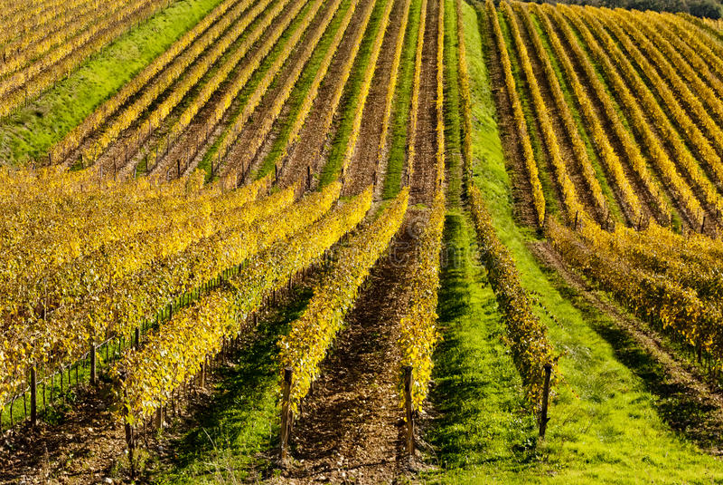 Chianti wina regionu winnicy, Tuscany zdjęcia royalty free