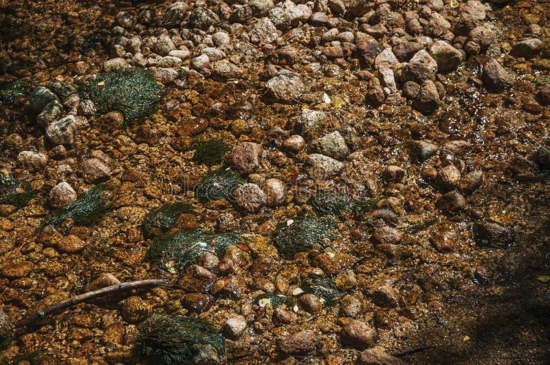 Chiara acqua in un'insenatura che passa le rocce e le piante immagine stock libera da diritti