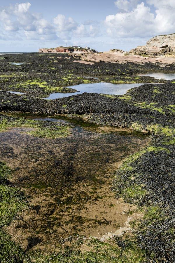 Chiari rockpools ed alga alle isole di Hilbre fotografie stock libere da diritti