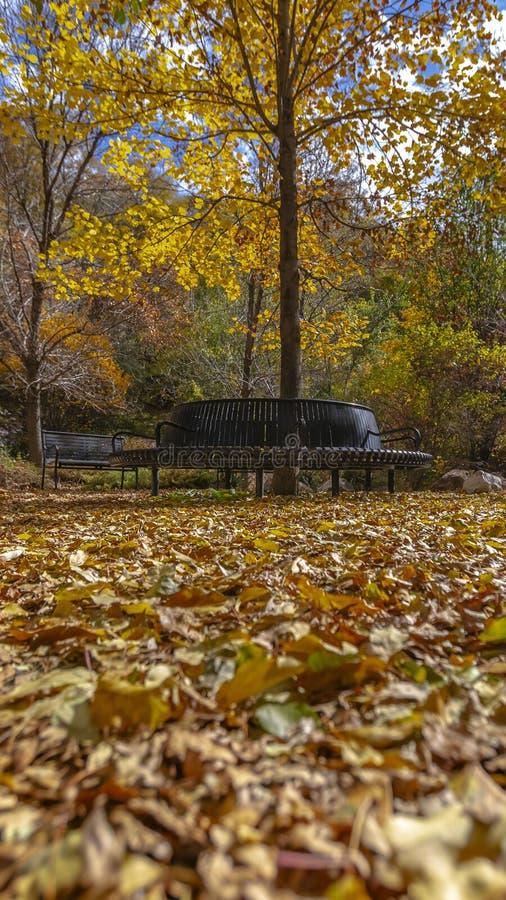 Chiaro bello parco verticale con i sedili ed il terreno di rilassamento coperti di foglie cadute immagine stock libera da diritti