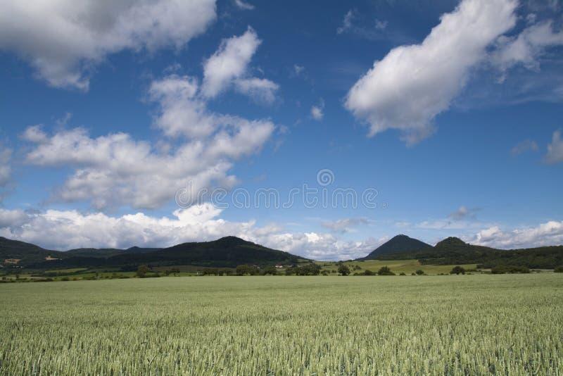 Chiaro campo di erba un giorno soleggiato fotografia stock libera da diritti