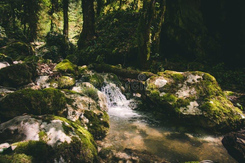 Chiaro fiume della corrente dell'acqua nel paesaggio della foresta immagini stock libere da diritti
