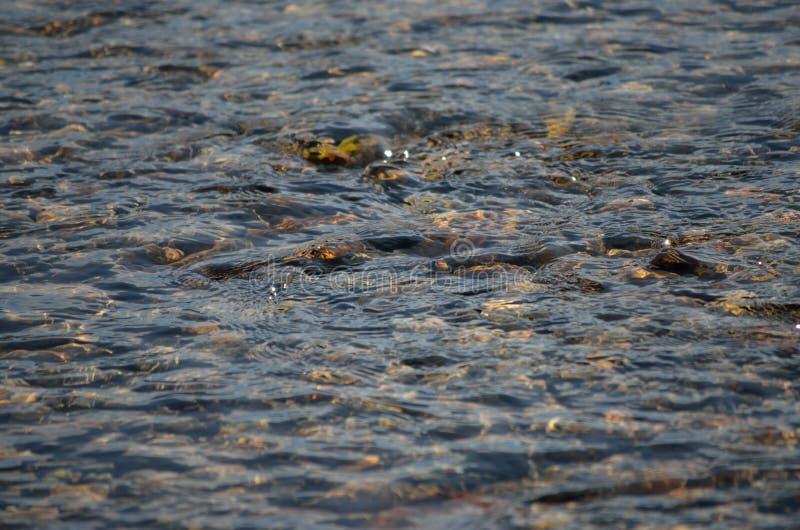 Chiaro scorrimento dell'acqua del fiume fotografia stock libera da diritti