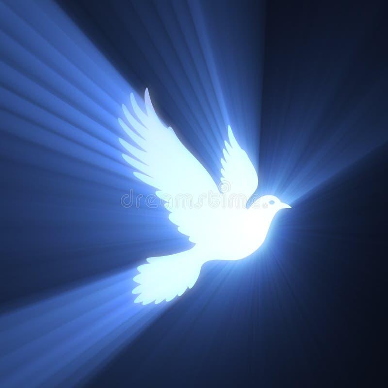 Chiarore chiaro pacifico dell'uccello della colomba illustrazione vettoriale