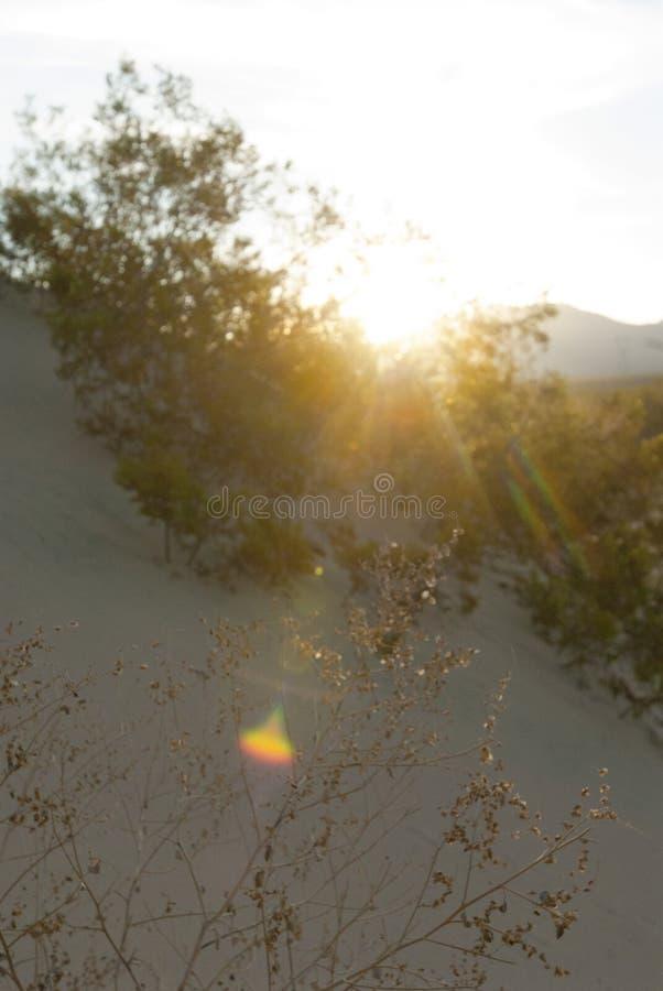 Chiarore della luce di alba del paesaggio del deserto immagini stock