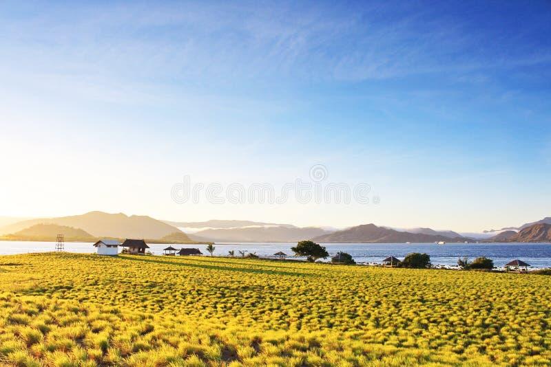 Chiarore di alba con il piccolo arbusto verde nella priorità alta e le montagne nebbiose nei precedenti immagini stock