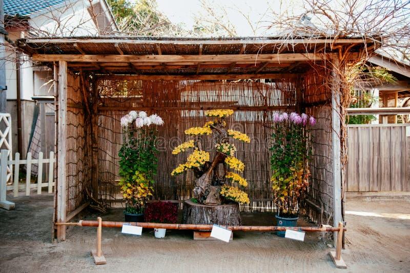 Chrysanthemum Kiku Japanese flower arrangement at Boso No Mura O. Chiba, JAPAN - Chrysanthemum Kiku Japanese flower arrangement at Boso No Mura Open air museum stock photos