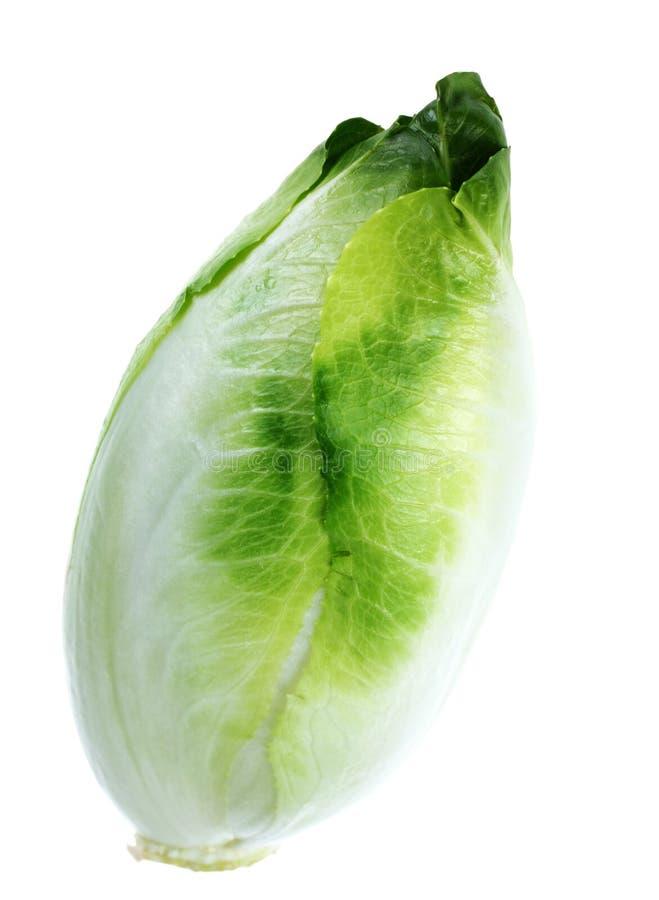 Chicória verde imagens de stock