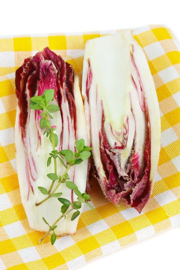 Chicória vermelha. imagem de stock