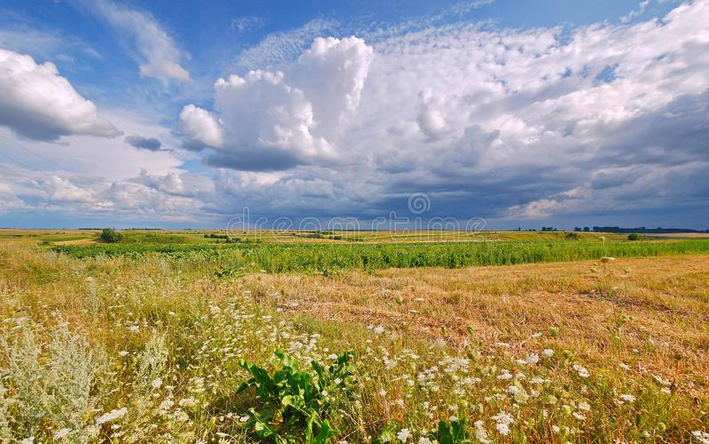 A chic landscape of the field with green grass and flowers stretching into the distance to the horizon line where it. Touches the blue sky with clouds. . For royalty free stock images