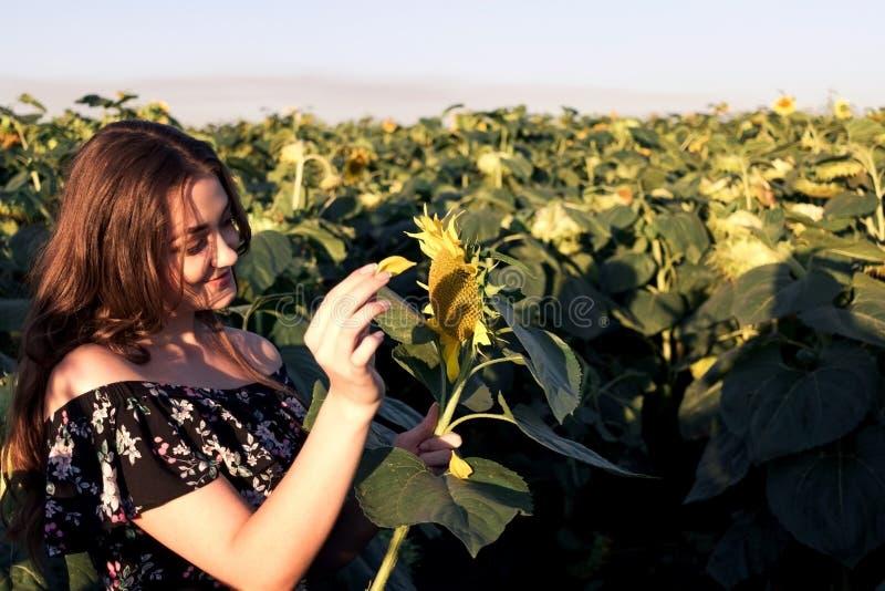 Chica joven con los girasoles en el sol brillante imágenes de archivo libres de regalías