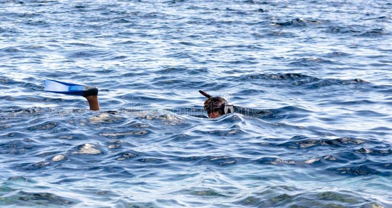 Chica joven en una máscara que nada y nadadas que bucean en el mar en Egipto Dahab Sinaí del sur imagenes de archivo