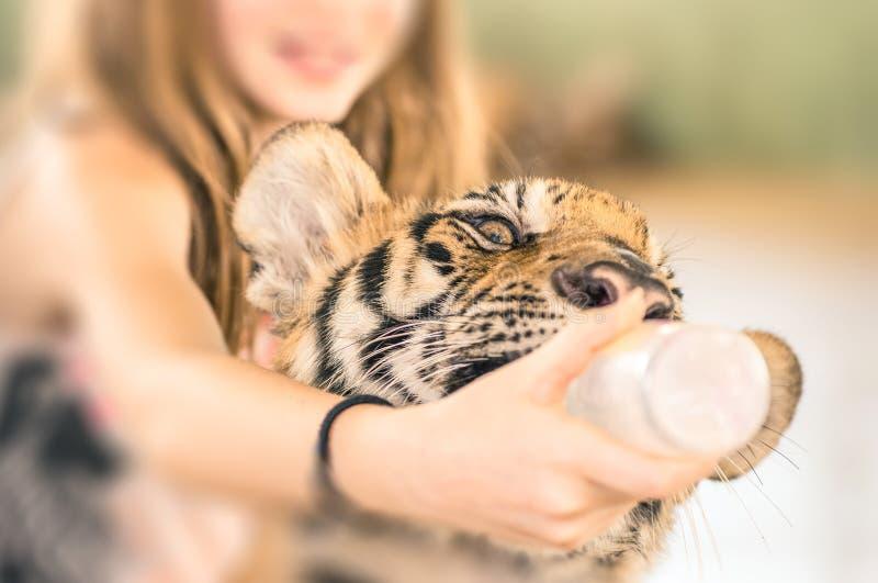 Chica joven que alimenta un tigre de bebé con el biberon en el parque zoológico imágenes de archivo libres de regalías