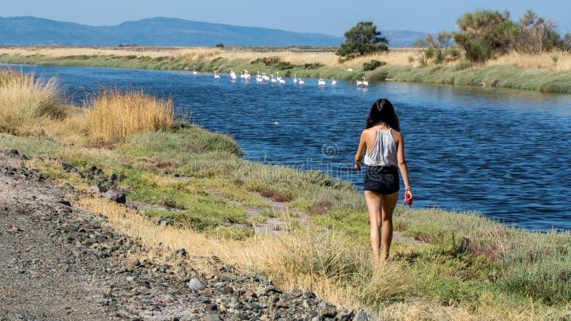 Chica joven que camina hacia flamencos en el agua fotografía de archivo libre de regalías