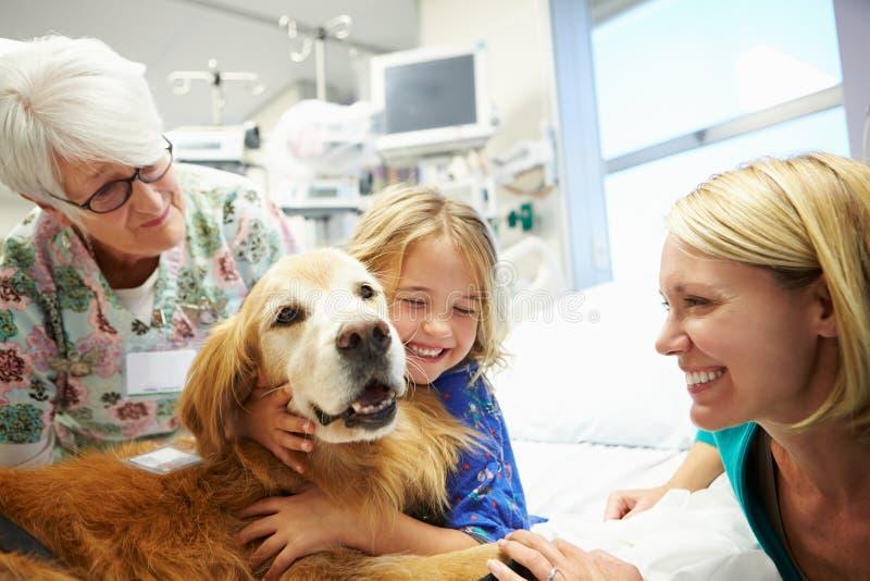 Chica joven que es visitada en hospital por el perro de la terapia fotos de archivo