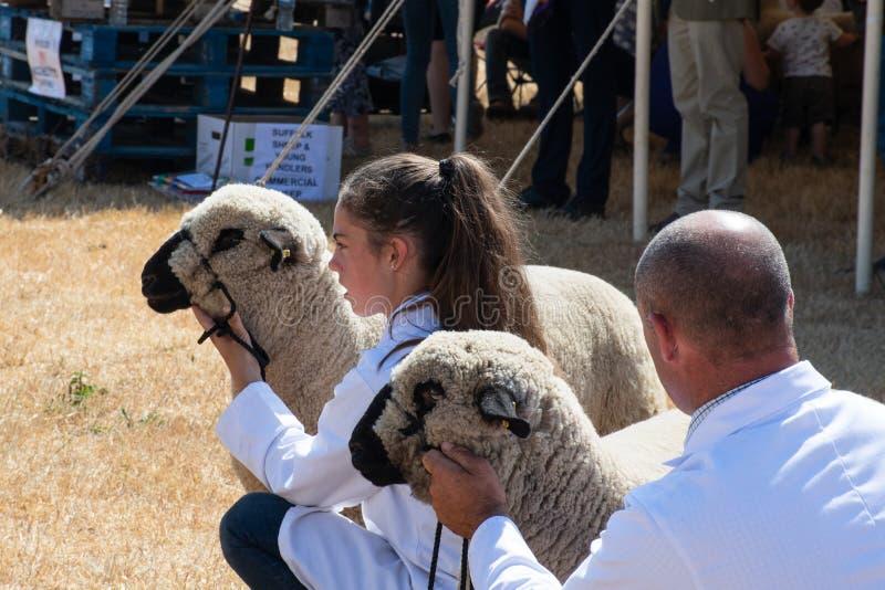 Chica joven que exhibe ovejas pedigríes en la demostración agrícola imagen de archivo libre de regalías