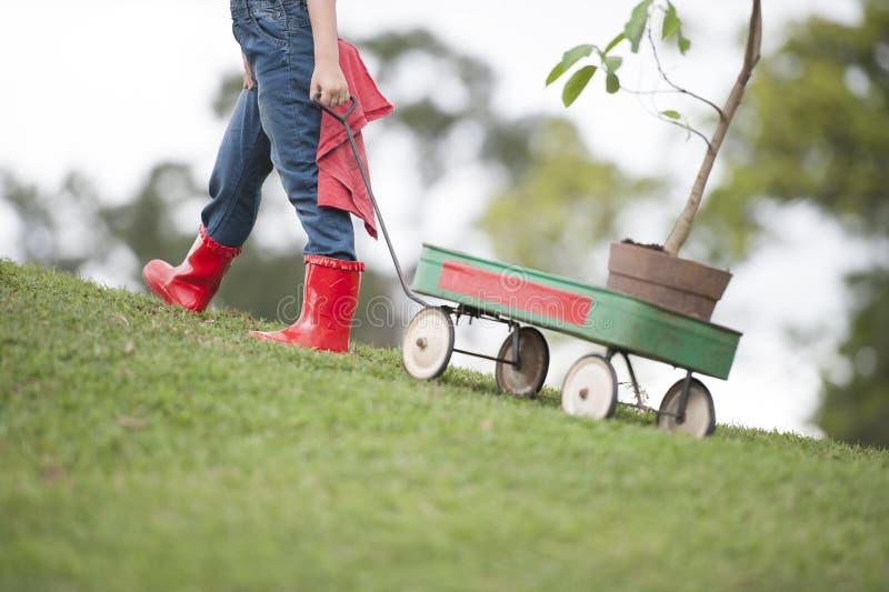 Chica joven que planta el árbol en el parque eco-enterado imagen de archivo libre de regalías