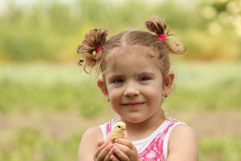 Chica joven que sostiene el pequeño pollo fotos de archivo