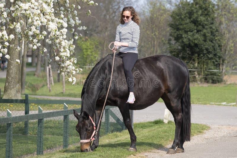 Chica sobre un caballo marrón preñado sin montura, con flor blanca en el fondo imagen de archivo