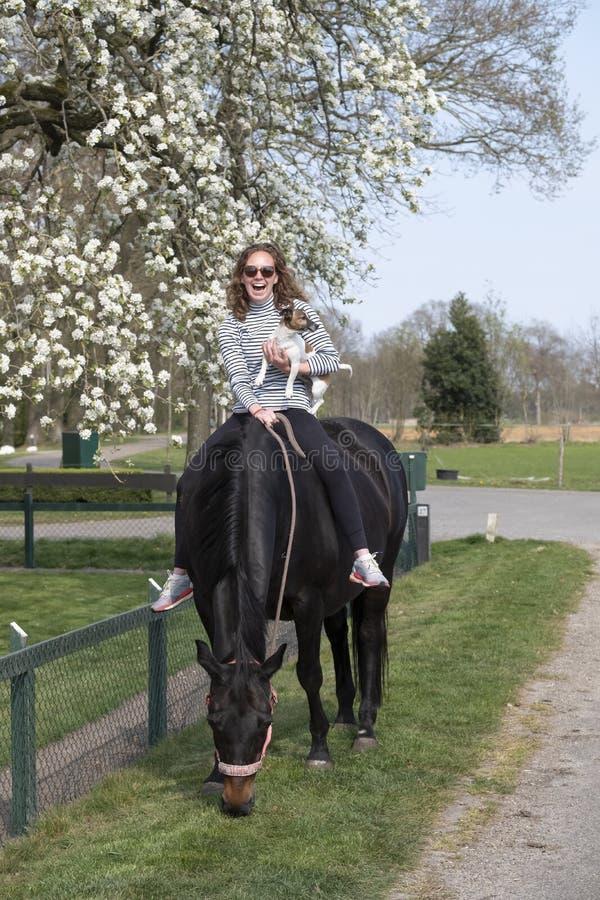 Chica sobre un caballo marrón preñado sin montura, con flor blanca en el fondo imágenes de archivo libres de regalías