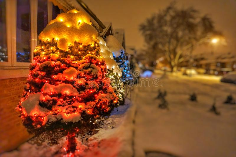 Chicago Christmas lights in a trees. Christmas lights displayed in trees in the snow royalty free stock photography