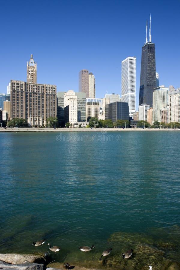 chicago coast downtown golden στοκ εικόνα