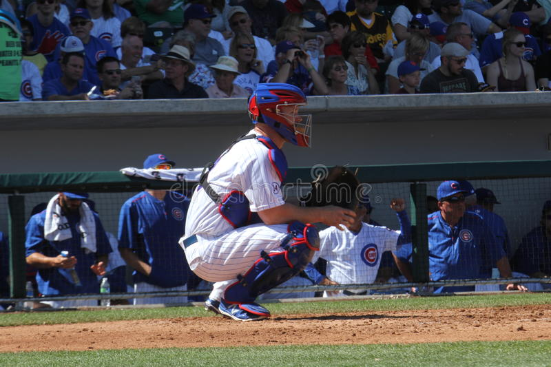 Chicago Cubs royalty free stock image