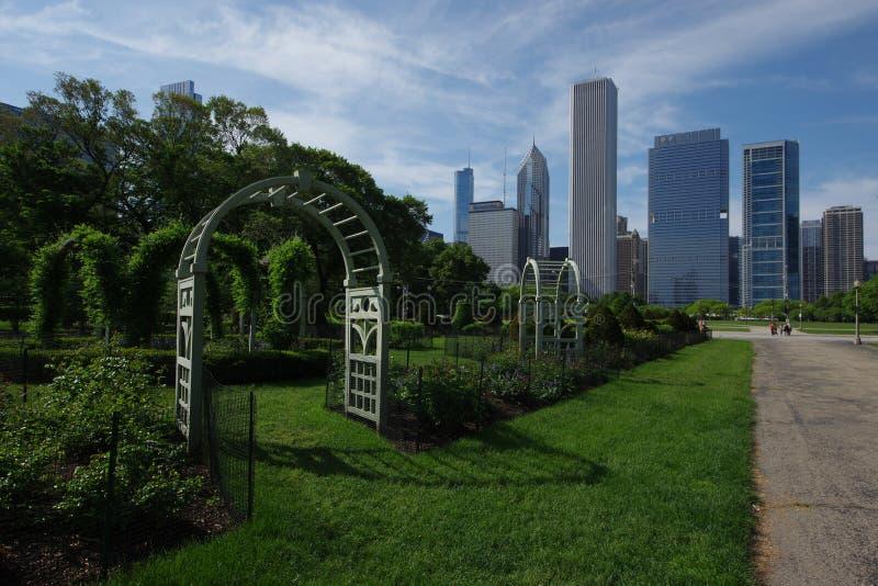 Chicago Grant Park och stadshorisont royaltyfria bilder