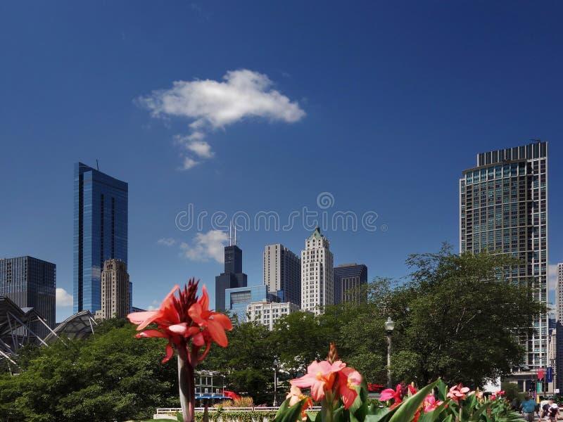 Chicago horisontsikt arkivbilder
