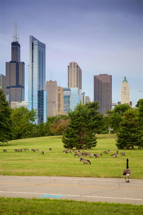 Free Chicago Lakefront Trail And Skyline Stock Images - 161961634