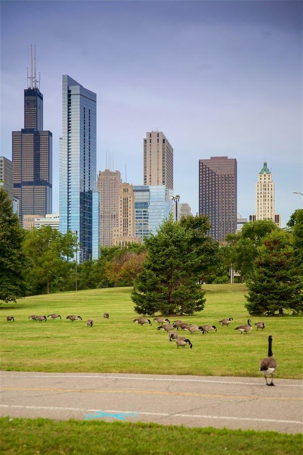 Chicago Lakefront Trail und Skyline stockbilder