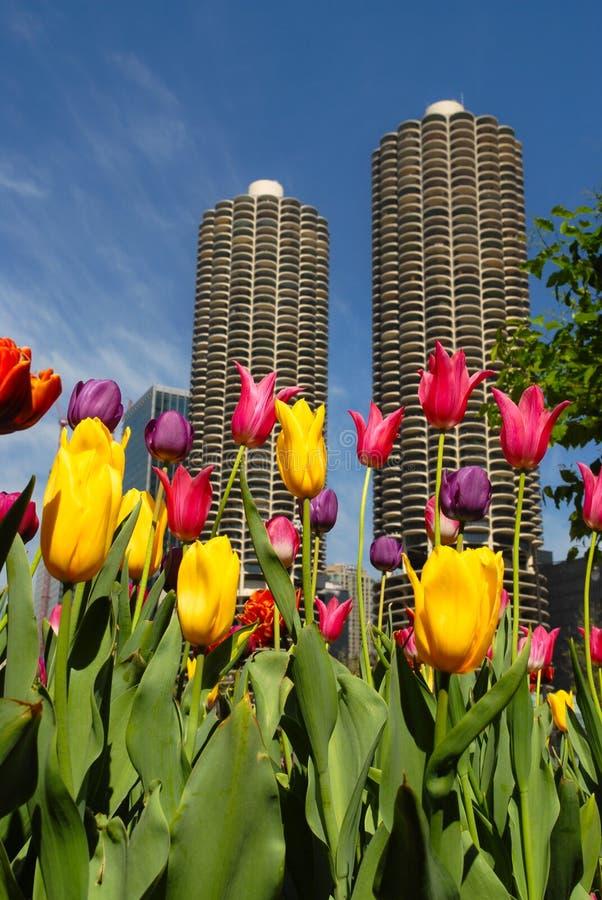 Chicago fjädrar in arkivfoton