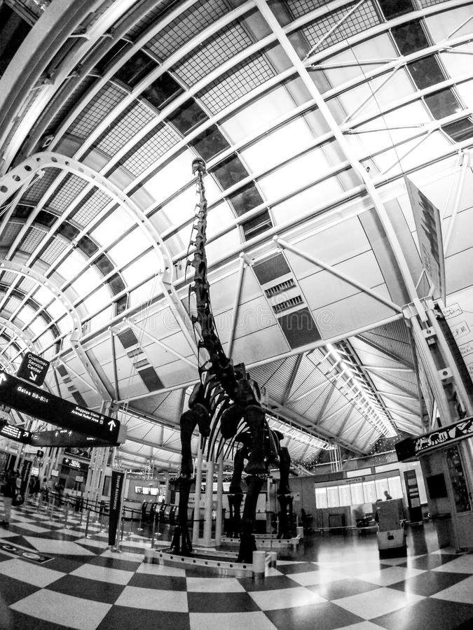 Chicago O`Hare International Airport indoors near concourse C royalty free stock photography
