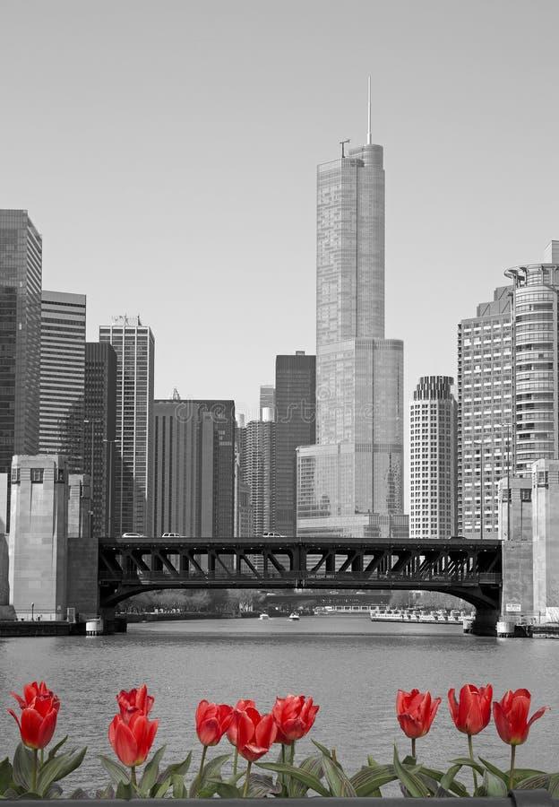 Chicago sjösikt royaltyfria bilder
