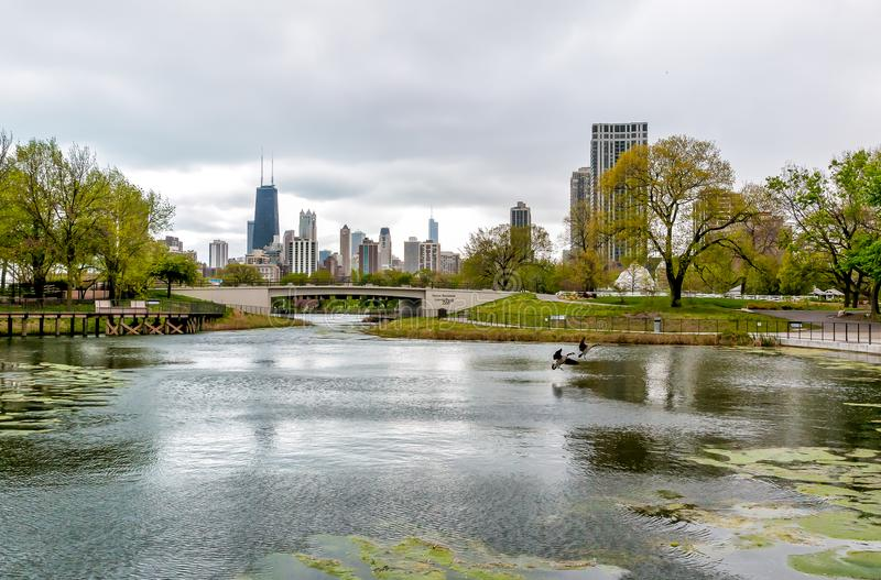 Chicago skyline with skyscrapers viewed from Lincoln Park Zoo over lake, USA royalty free stock image