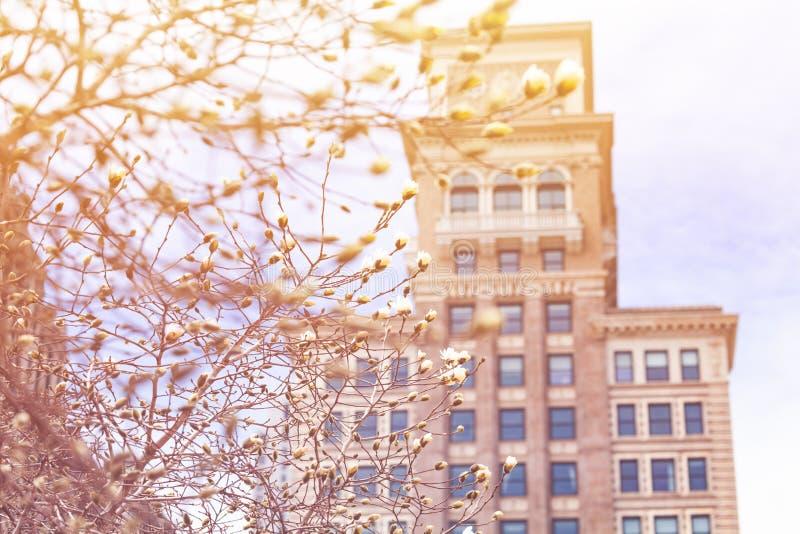 Chicago vårcentrum med tornet på bakgrund fotografering för bildbyråer