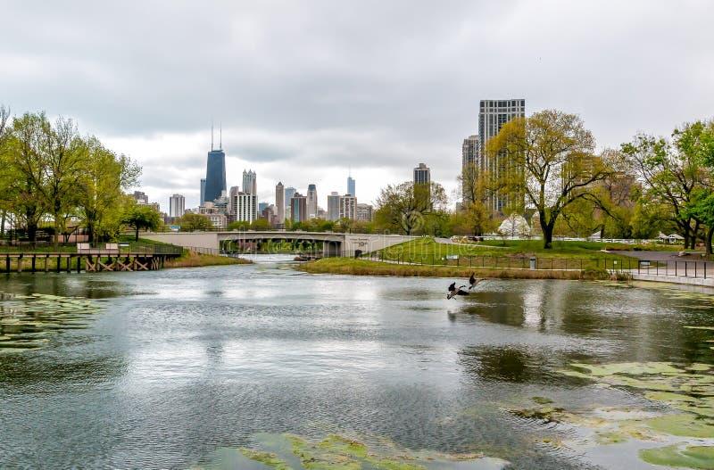 Chicagowska linia horyzontu z drapaczami chmur przeglądać od Lincoln parka zoo nad jeziorem, usa obraz royalty free